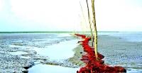 <small>বিষখালী ও বলেশ্বর নদীর মোহনা</small>পাথরঘাটায় অবৈধ জালে ধ্বংস করছে রেণু-পোনা (ভিডিও সহ)