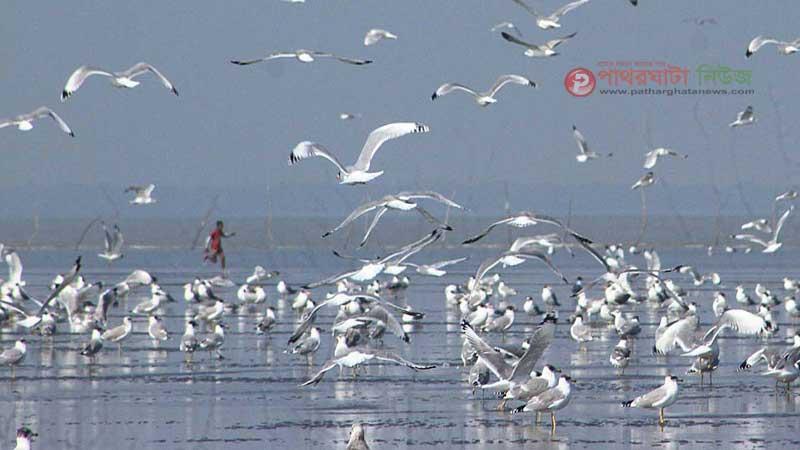 ছবির কারিগর আরিফ রহমান তোলা ছবি, বিষখালী নদীর গাংচিল