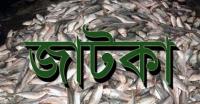 কলাপাড়ায় ৫০ মণ জাটকা জব্দ