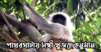 <small>পথহারা বন্যপ্রানী</small> পাথরঘাটায় সঙ্গী খুজছে হনুমান ও চিত্রল হরিন (ভিডিও সহ)