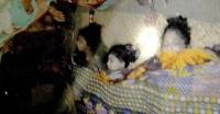 মর্মান্তিক: পটুয়াখালীর বাউফলে পানিতে ডুবে তিন বোনের মৃত্যু