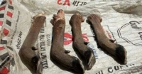 হরিণের ৪টি পাসহ দুই শিকারি আটক