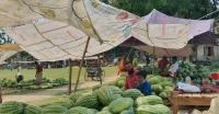 পাথরঘাটায়  তরমুজের গায়ে আগুন  বাজার মনিটরিং এর দাবি সাধারণ মানুষের