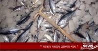 পাথরঘাটায় ৪ মন মাছসহ ট্রলার জব্দ, ভ্রাম্যমাণ আদালতে জরিমানা
